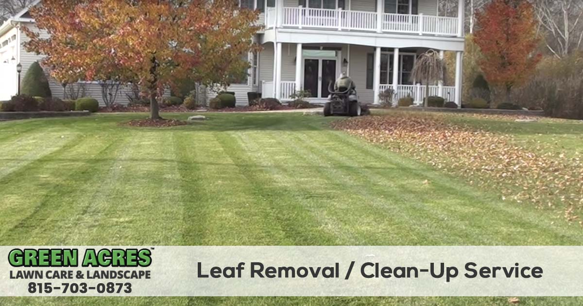 Leaf Removal and fall clean up services
